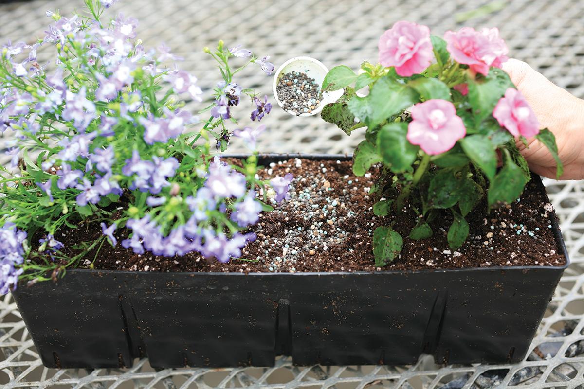 Sprinkle fertilizer evenly across the soil surface.
