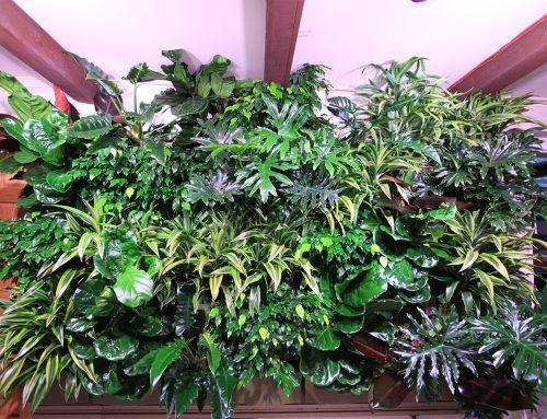 Broad Leaved Tropicals