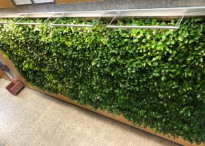 378 square foot LiveWall green wall at Central Michigan University