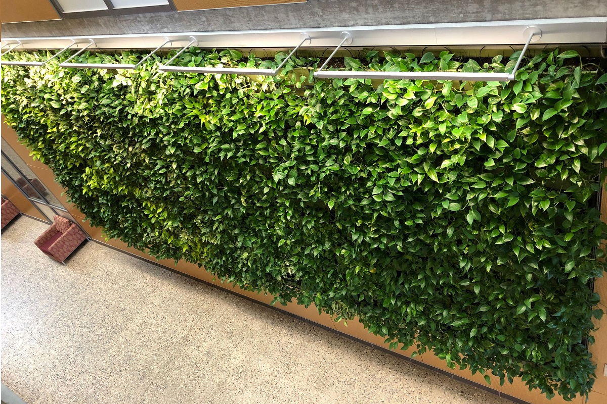 378 square foot LiveWall green wall at Central Michigan University