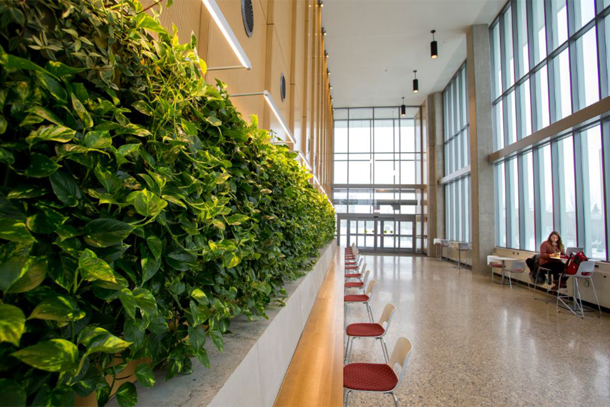 One of two green walls at Central Michigan University.