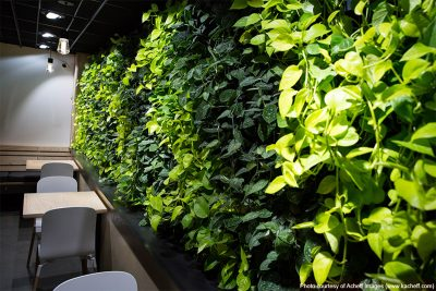 green wall at cova coffee in portland oregon