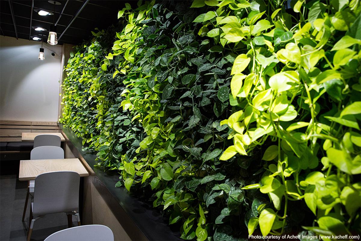 green wall at cova coffee in portland oregon