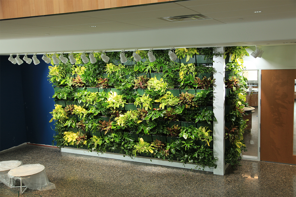 Indoor Green Wall on the day of installation at Jack and Mary De Witt Center for Science and Technology at Cornerstone University