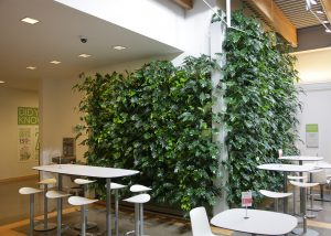 Grand Rapids Downtown Market Indoor living Wall planted with Pothos and Philodendron