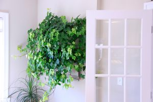 LiveWall with Hedera `Neon'