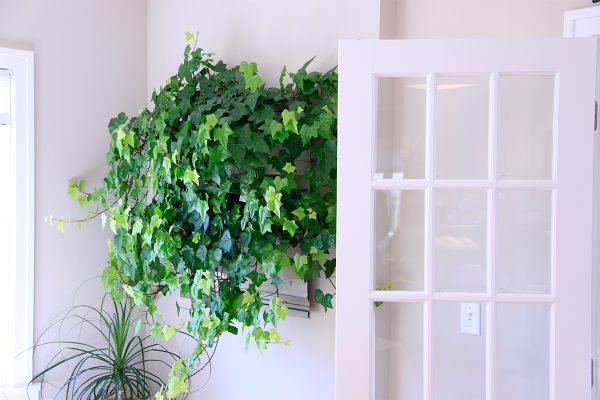 LiveWall with hedera neon