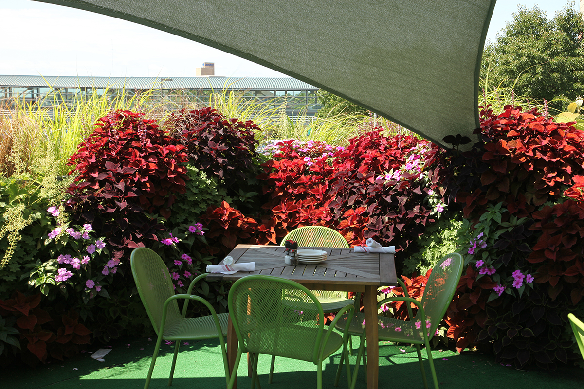 Brightly colored annual green wall plants invite diners to the Skydeck at Bobarino's.