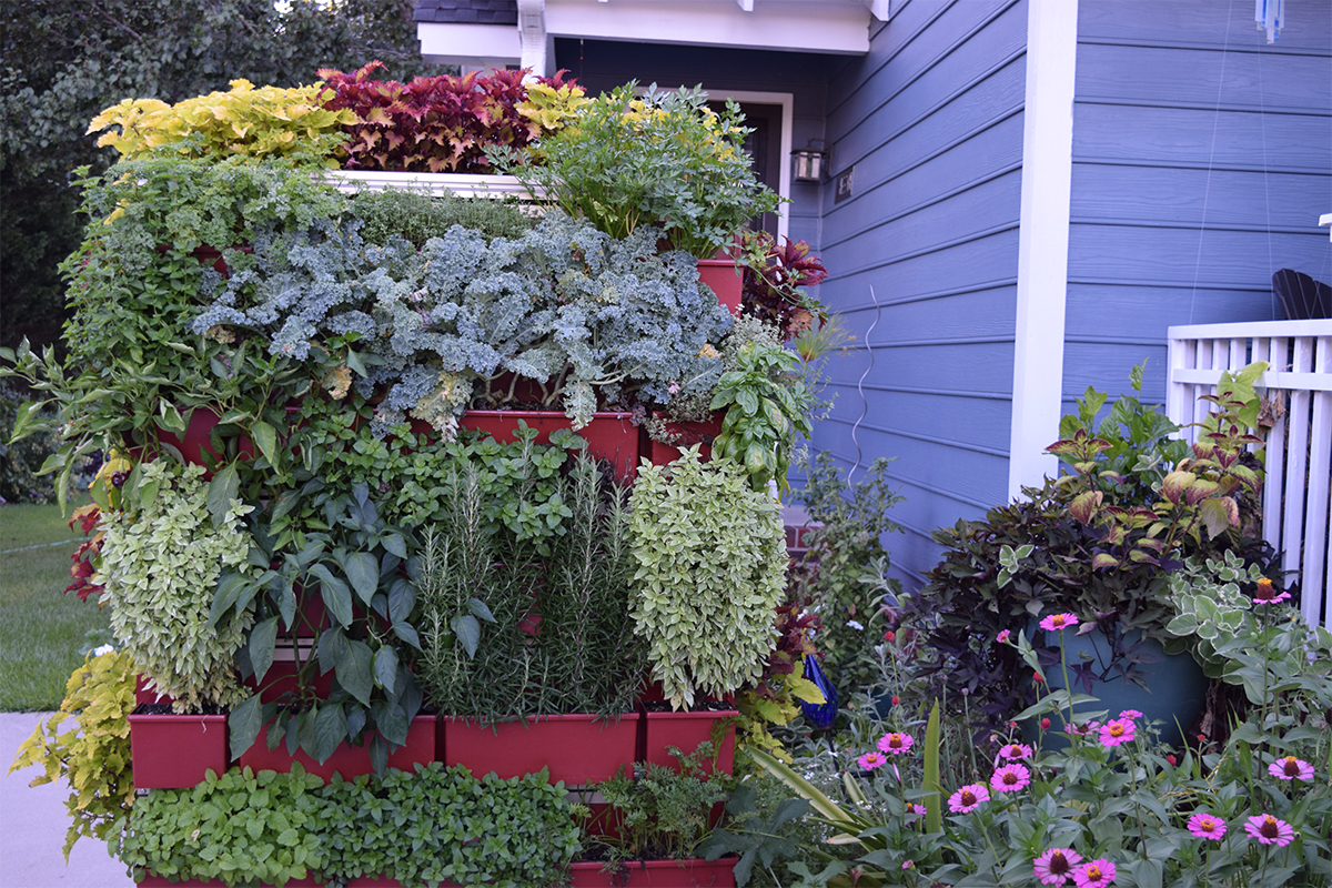 Brie Arthur Gluvna's outdoor LiveScreen planted with a vertical garden of nutritious produce.