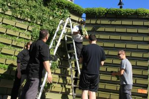 Chef's Planting Green Wall with Herbs