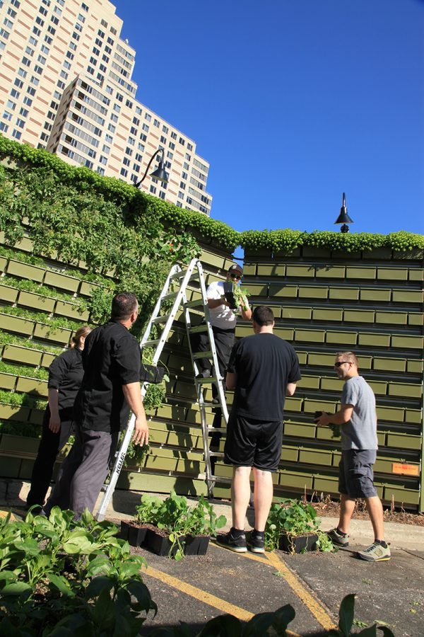 Chefs planting wall of herbs at the B.O.B.