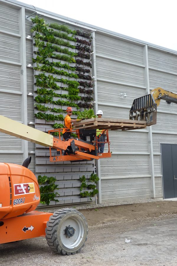 Installation of vertical garden planters on tall living wall structure.
