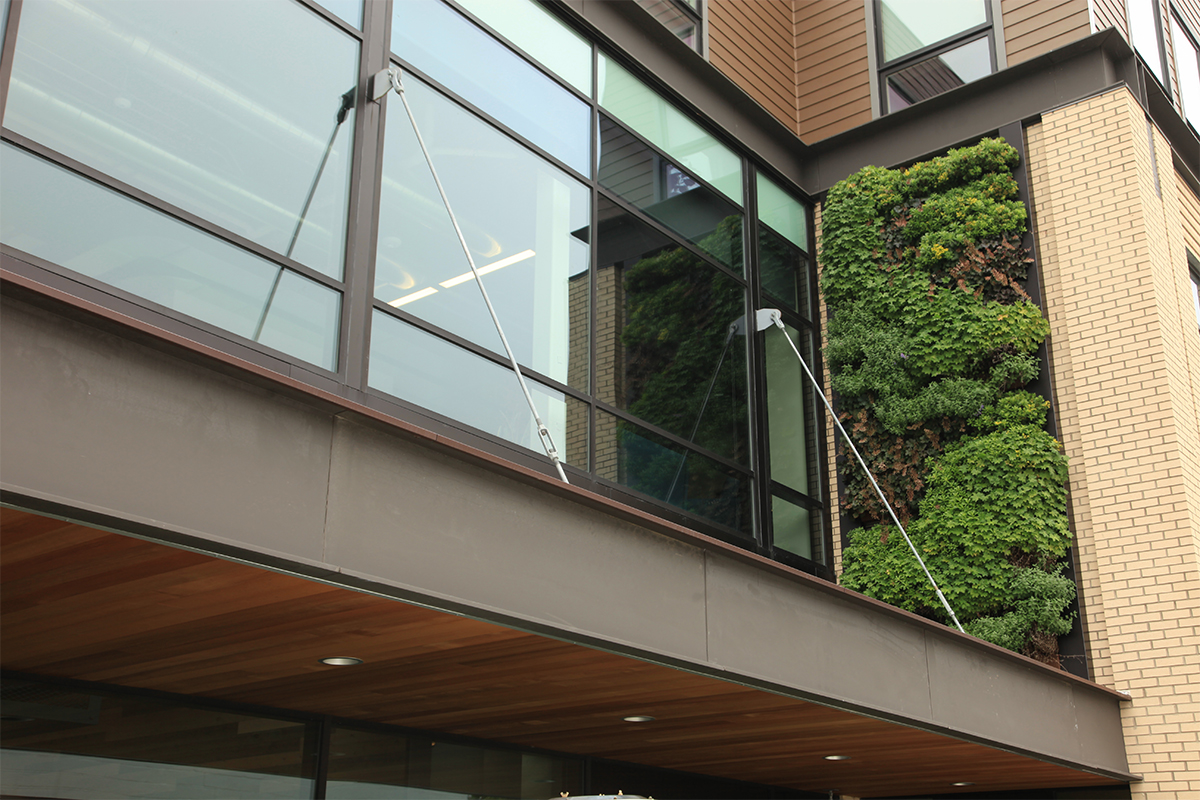 Forty Acres Restaurant in Grand Rapids, Michigan has a living wall planted with perennials.