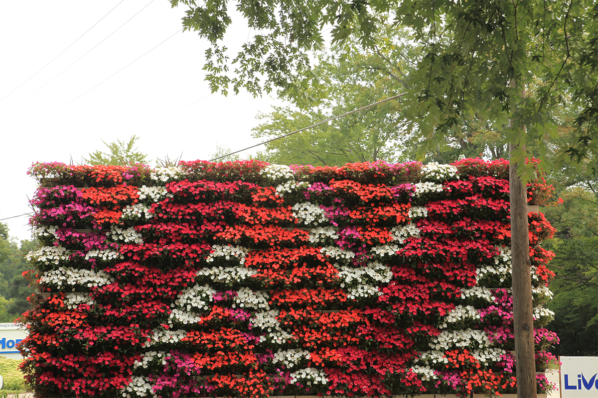 SunPatiens in an aztec pattern on a living wall.