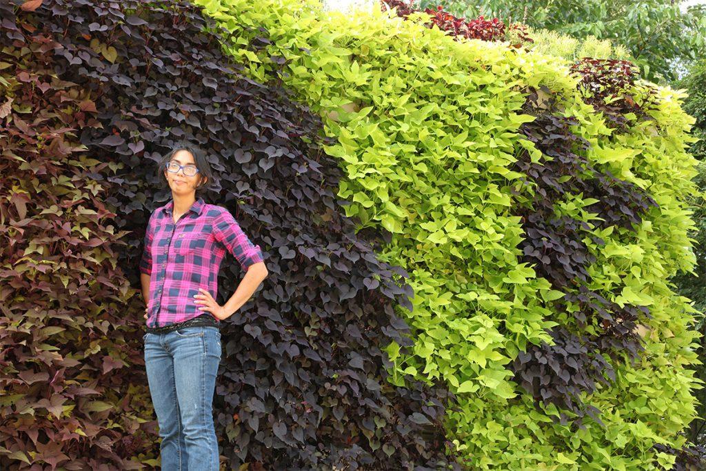 Contrasting Sweet Potato Green Wall