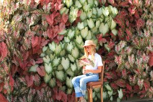 LiveWall with Pastel Colored Caladiums in a Vertical Alignment