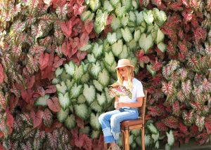Caladiums aligned vertically in a green wall.
