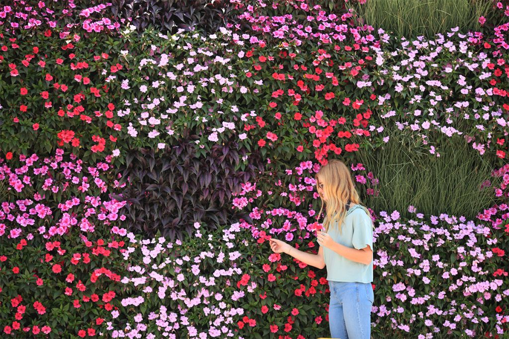 LiveWall in Plaid Pattern with, Stroilanthus, Sunpatiens, and Rushes