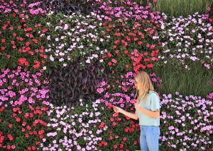 Plaid pattern made of out mixed annuals on a living wall.