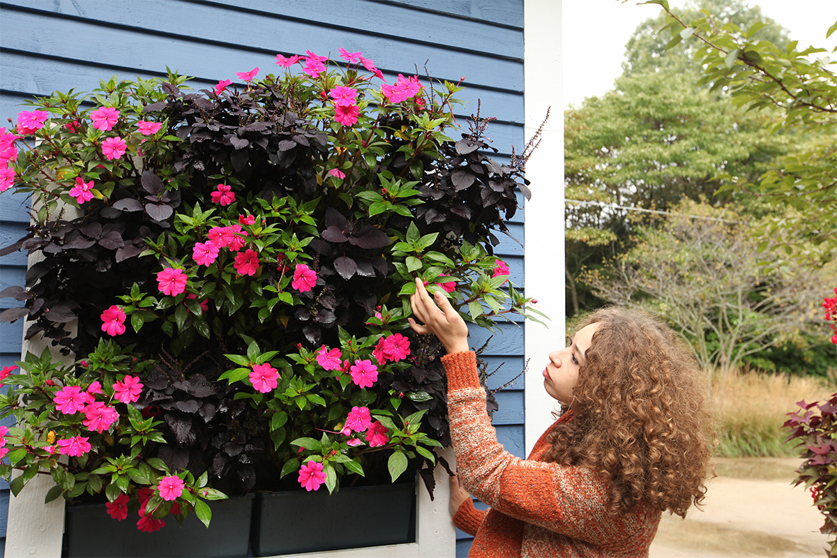 Residential project with mixed SunPatiens and Coleus.