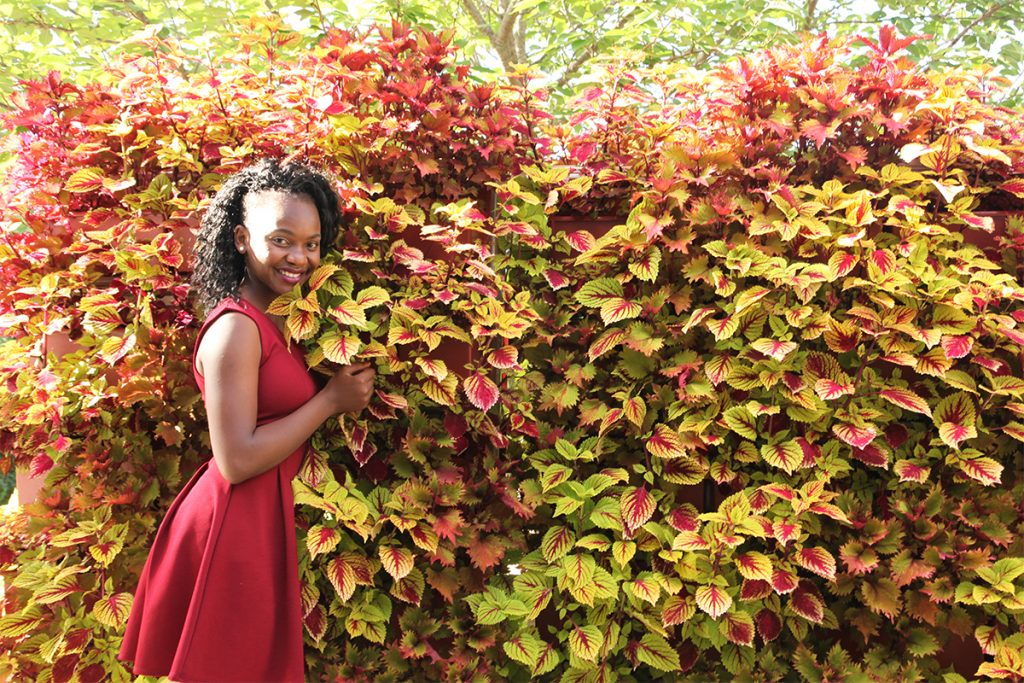 Red and Gold Leaved Coleus Green Wall