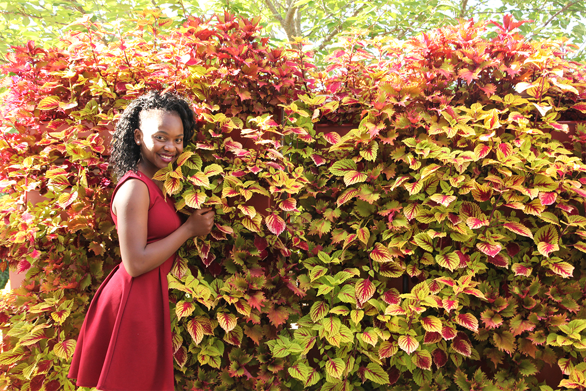 Beautiful contrast of red and gold leaved Coleus green wall.