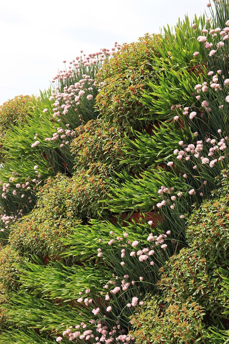 Angled living wall with mixed perennials.