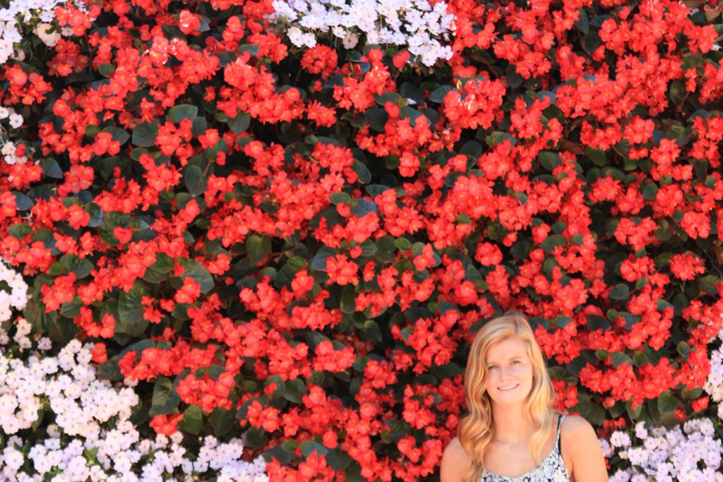 Begonia 'Big Red' in Heart-Patterned LiveWall System
