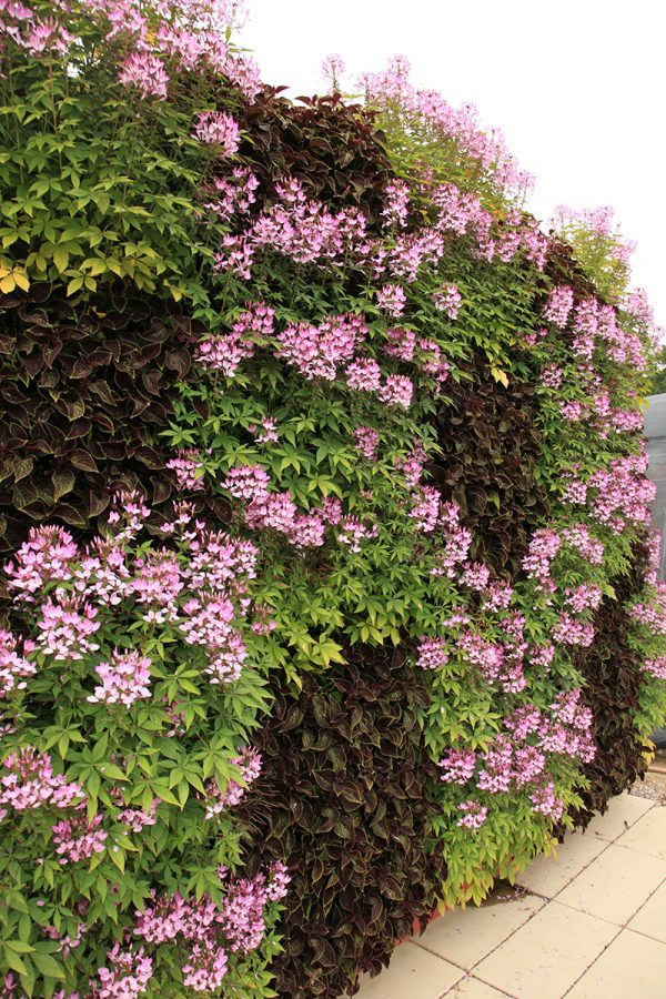 Living walls can be used to create illustrative patterns.