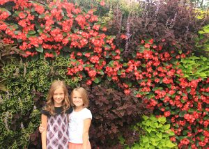 Multicolored living wall with Coleus, Begonia, and Sweet Potato Vine.