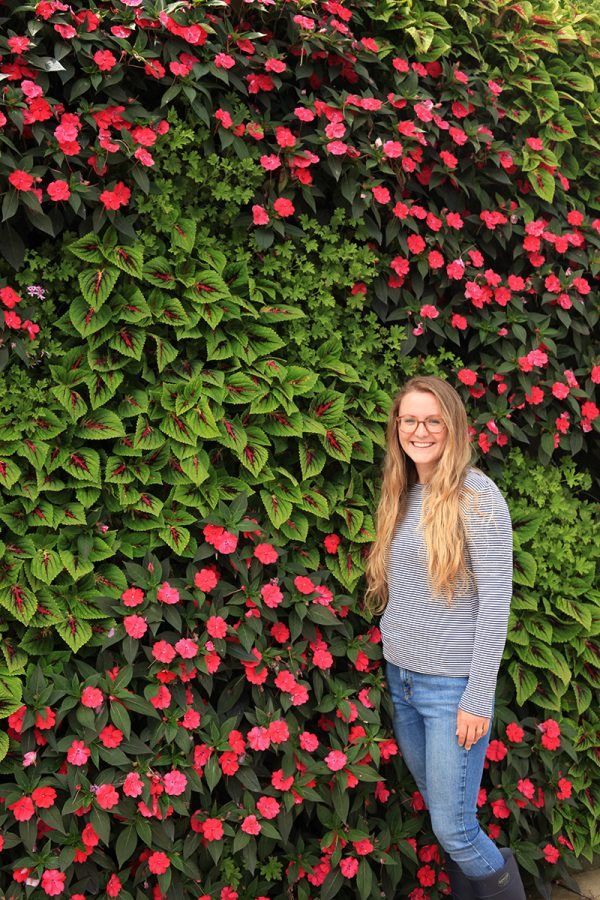 Combination of pink and green in a living wall.