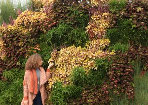 Wavy living wall with Coleus and Juncus.