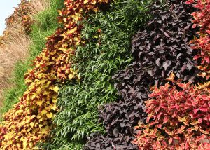 Contrasting colored annuals in a vertical arrangement,