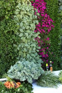 Grow food on walls with a vertical garden. LiveWall can support an average of 1 oz per SF per week of edible produce.
