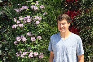 Vertically Arranged Green Garden with Mixed Annuals