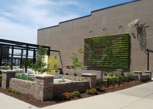 Newly planted wall of perennials on Kibbey Building in Marshalltown, Iowa.