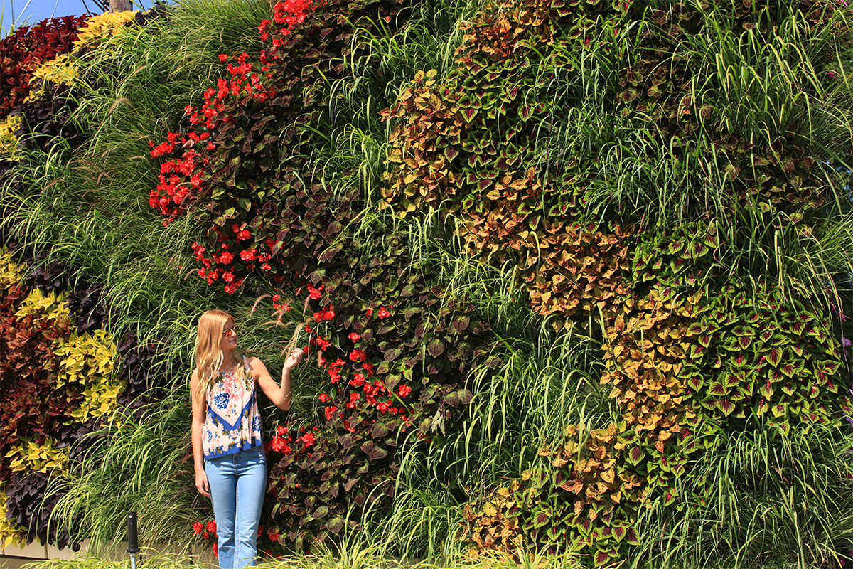 This living wall is planted in waves of color, with grasses that add motion and texture.