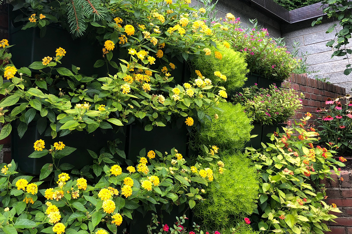 Annual flowering plants in residential plant wall.