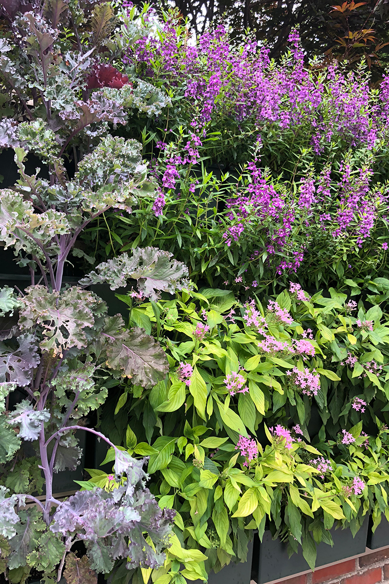 Residential green wall planted with a mix of edible and ornamental plants.