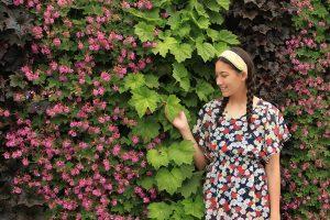 Heuchera 'Autumn Bride' and Geranium 'Bevans' Green Wall