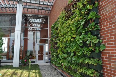 Newly planted green wall in the healing garden at Jersey Shore Medical Center's Hope Tower.