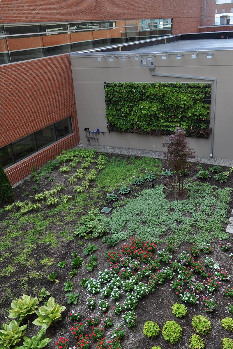 Lower level living wall with newly planted garden at Hope Tower JSMC.