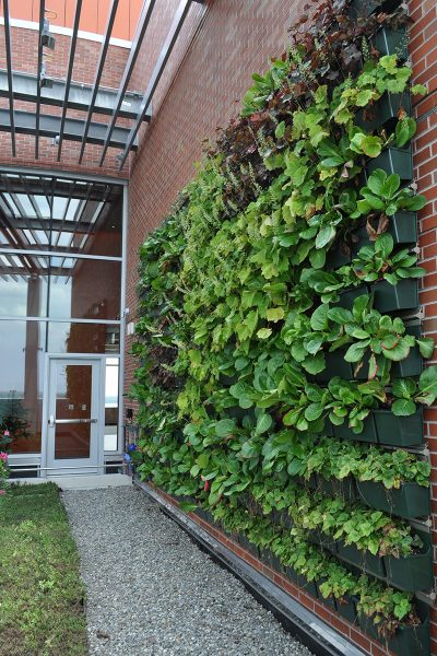 Recently planted living wall at JSMC Hope Tower in Neptune, New Jersey.