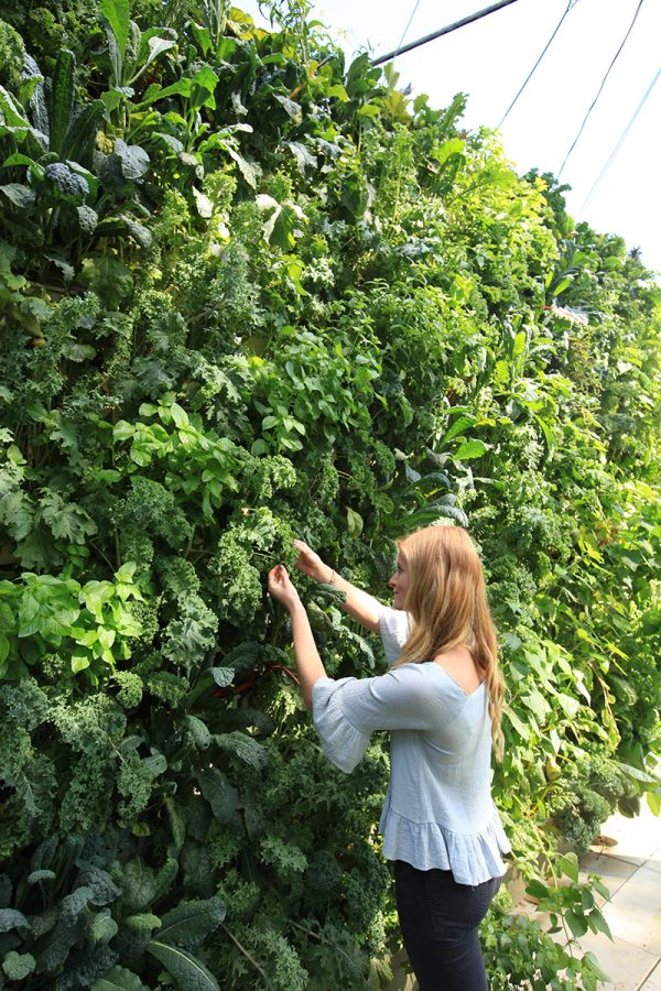 Variety of leafy greens in a vertical garden.