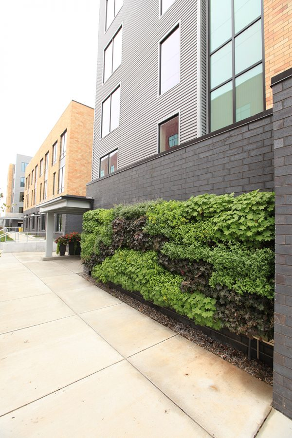 Outdoor living wall planted with perennials in the shape of an arch at 234 Market in Grand Rapids, Michigan.