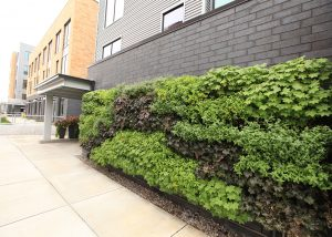 234 Market Apartments' Green Wall