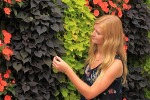 Orange, Yellow, and Purple Annuals in Outdoor Green Walls