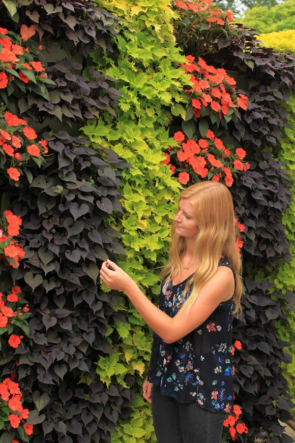 Colorful annuals aligned vertically in green walls.