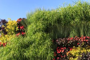 Papyrus, Begonia, and Coleus in LiveWall