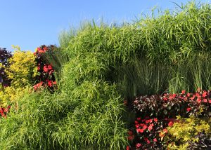 Zigzag pattern of Papyrus, Begonia, and Coleus in a green wall.